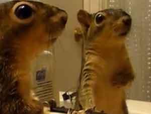 Animales Contra Su Reflejo En El Espejo