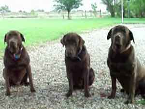 Perros Dan Gracias Antes De Ingerir Sus Alimentos