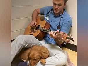 Veterinario Cuida A Un Perro Antes De Su Cirugía