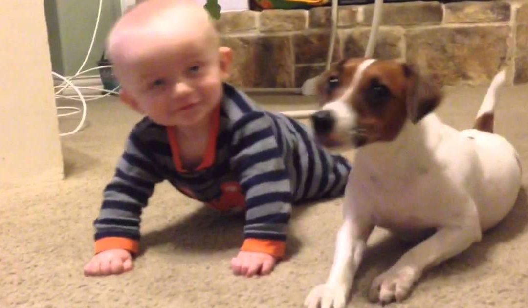 Perro Enseñando A Bebé
