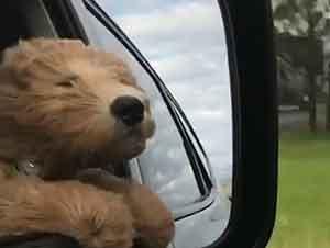 Primer Viaje En Carro De Un Cachorro